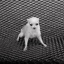 Killer by Jenny Lynn (Black & White Photograph)