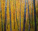Forest Verticals by Ken Elliott (Giclee Print)