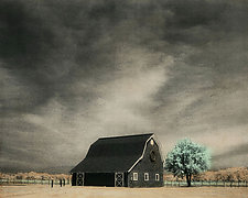 Vineyard Barn and Tree by Elizabeth Holmes (Infrared, Hand Painted Photograph)