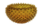 Large Urchin Bowl by R. Guy Corrie (Art Glass Bowl)