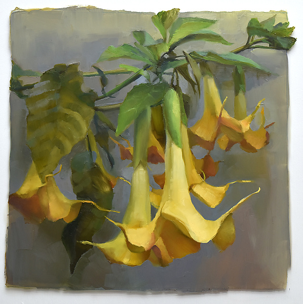 Yellow Trumpets