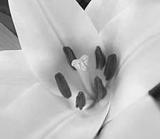 Accentato by Katherine Morgan (Black & White Photograph)