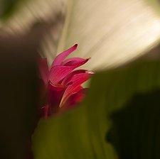 Grazioso by Katherine Morgan (Color Photograph)