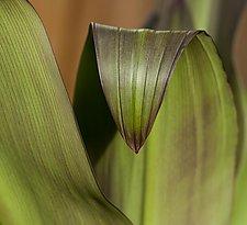 Marcato by Katherine Morgan (Color Photograph)