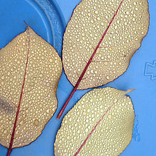 Leafblue by John Boak (Color Photograph on Aluminum)