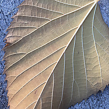 Leaf Clematis Fishnet Triptych by John Boak (Photograph on Aluminum)