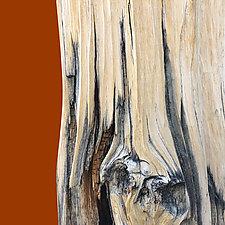 Bristlecone 2133 by John Boak (Giclee Print)
