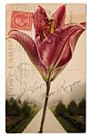 Lily Path by Kevin Sprague (Giclée Print)