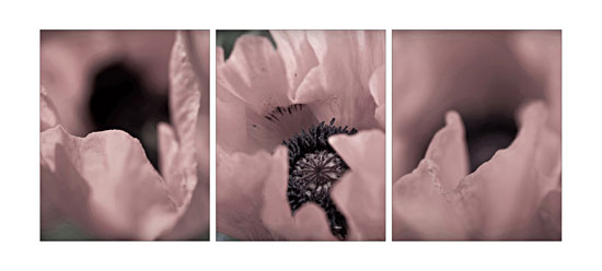 Triptych of Oriental Poppy 1