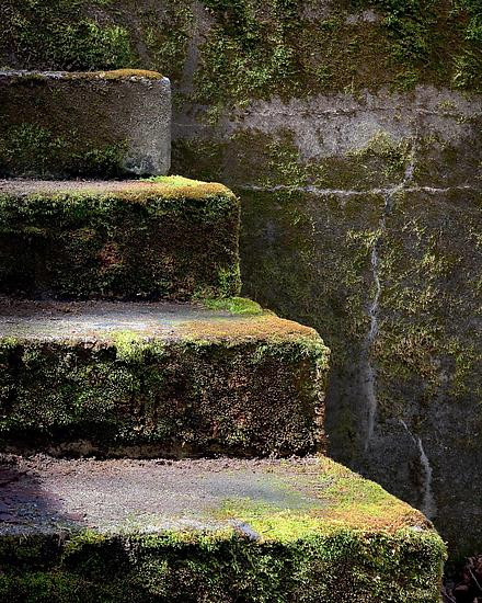 Mossy Steps of WWII Bunker #1