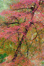 Ruby Riches by Patricia Garbarini (Color Photograph)