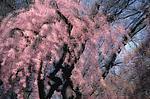 Spring Montage II by Patricia Garbarini (Color Photograph)