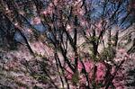 Spring Montage III by Patricia Garbarini (Color Photograph)