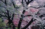 Spring Montage IV by Patricia Garbarini (Color Photograph)