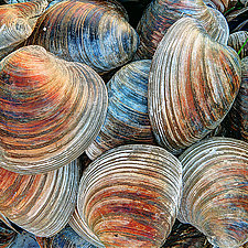 Clam Shells by Mike Cable (Color Photograph)