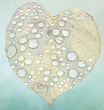 Rainy Day Heart by Pamela Viola (Giclee Print)