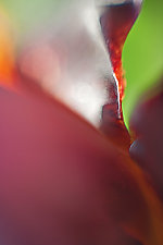On Impulse by Tim Forcade (Color Photograph)