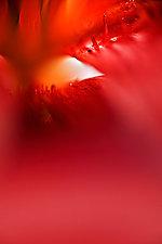 Envelop by Tim Forcade (Color Photograph)