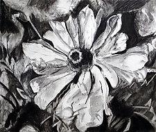 Coneflower in Charcoal by Debora  Stewart (Charcoal Drawing)