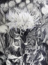 Basket Flower by Debora  Stewart (Charcoal Drawing)