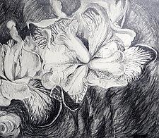 Iris by Debora  Stewart (Charcoal Drawing)