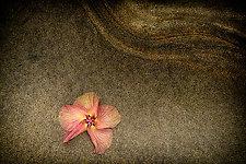 Ode to Kauai by Lori Pond (Color Photograph)