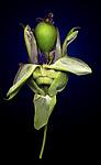 Passion Fruit by Raphael Sloane (Color Photograph)