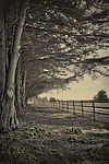 The Long fence by Lori Pond (Color Photograph)