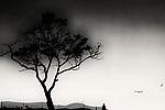 Stroll by Lori Pond (Black & White Photograph)