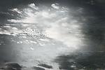 dawn Flight by Lori Pond (Black & White Photograph)