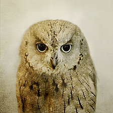 Healing Owl by Yuko Ishii (Color Photograph)