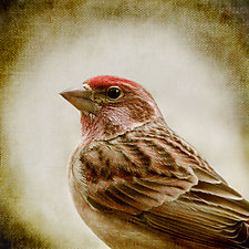 Song of a Cassin's Finch - Medium by Yuko Ishii (Color Photograph)