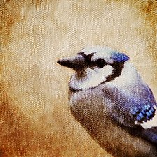 Song of a Blue Jay by Yuko Ishii (Color Photograph)