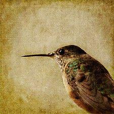 Song of a Calliope Hummingbird I by Yuko Ishii (Color Photograph)