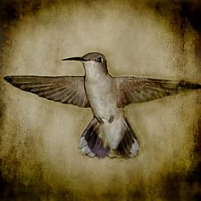 Song of a Black-chinned Hummingbird I by Yuko Ishii (Color Photograph)