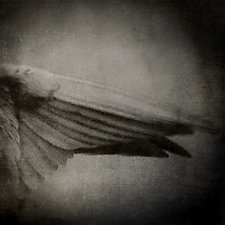 Wings by Yuko Ishii (Color Photograph)