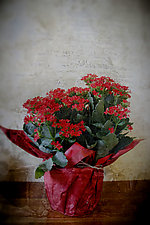 Birthday Flowers by Yuko Ishii (Color Photograph)
