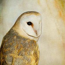 Song of a Barn Owl II by Yuko Ishii (Color Photograph)