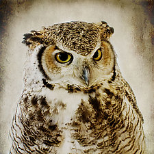 Healing Owl III by Yuko Ishii (Color Photograph)