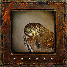 Northern Pygmy Owl III by Yuko Ishii (Mixed-Media Wall Art)