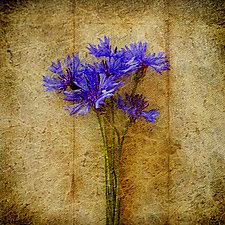 Solitude VI by Yuko Ishii (Color Photograph)