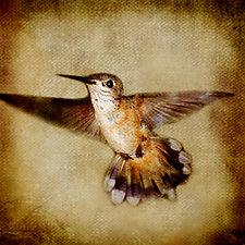 Song of a Rufous Hummingbird I by Yuko Ishii (Color Photograph)