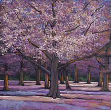 Cherry Blossoms by Johnathan  Harris (Giclee Print)