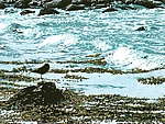 Seaside Rest by William Hays (Linocut Print)