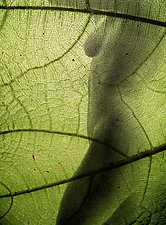 Green Leaf Nude by Michael Williams (Color Photograph)