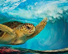 Loggerhead In Wave-Medium by Melinda Moore (Color Photograph)