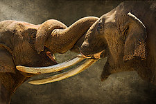 Friends Forever by Melinda Moore (Color Photograph)