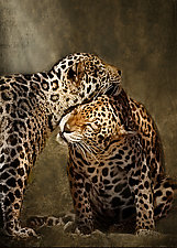 Lean on Me by Melinda Moore (Color Photograph)