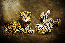 Jaguar Love by Melinda Moore (Color Photograph)
