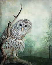 The Curious Owl by Melinda Moore (Color Photograph)